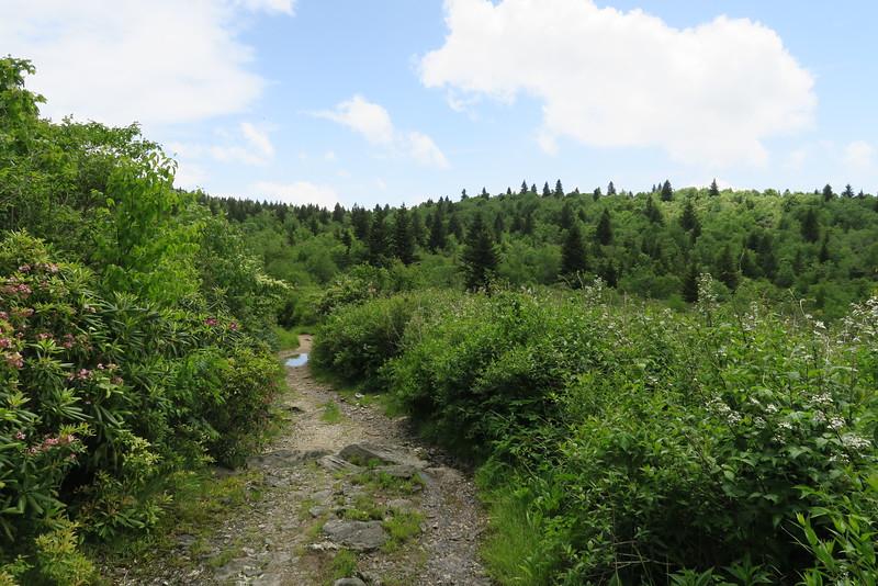 Flat Laurel Creek Trail - 5,750'