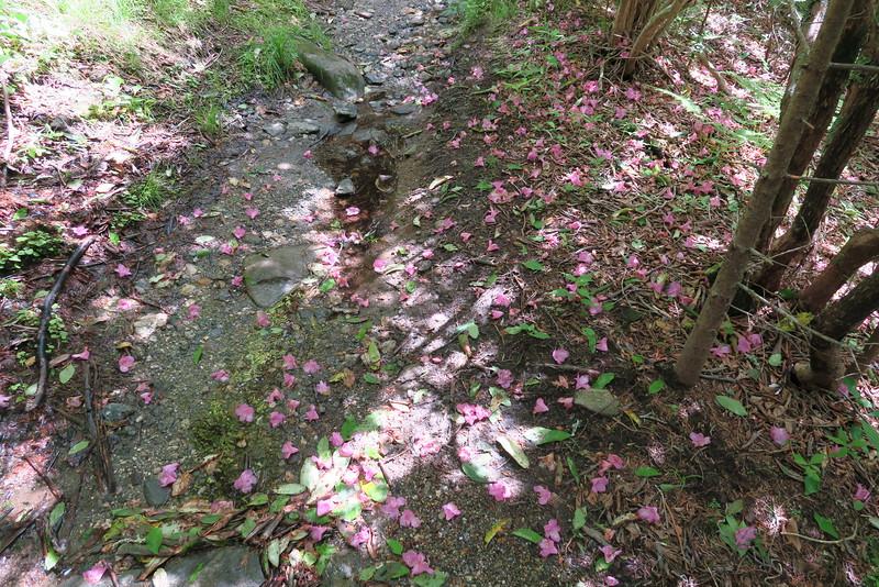 Little Sam Trail - 5,620'