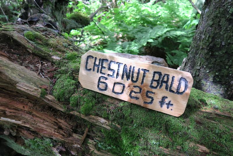 Chestnut Bald Summit - 6,025'