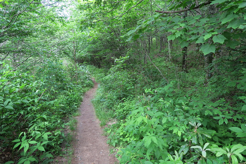 Flat Laurel Creek Trail - 5,560'