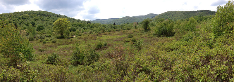 Graveyard Fields Loop Trail (5,040')
