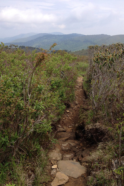 Art Loeb Trail (5,900')