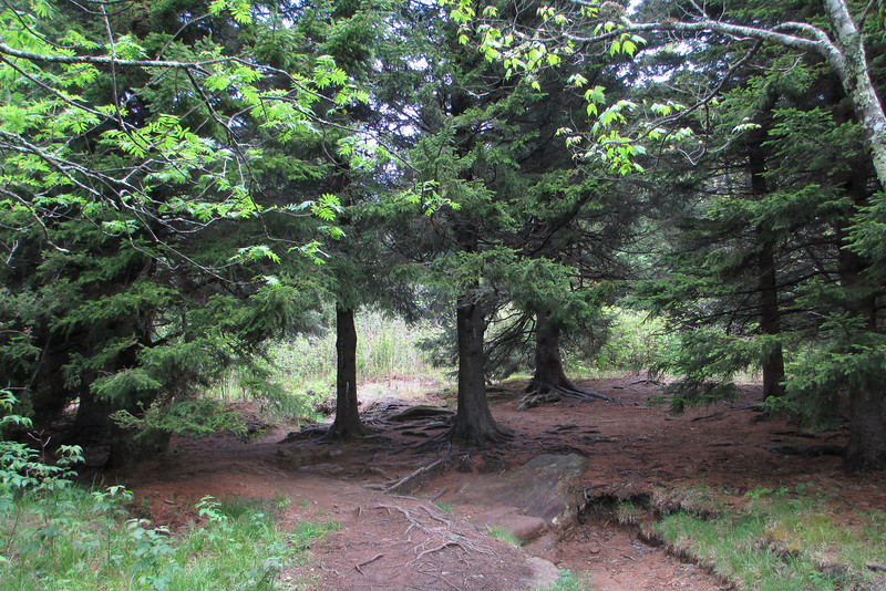 Art Loeb Trail (5,850')