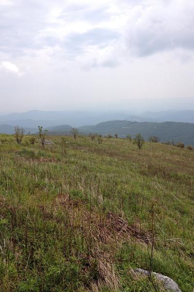 Black Balsam Knob Summit (6,214')