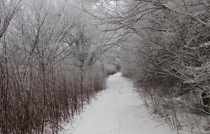 Sam Knob Trail - 5,760'