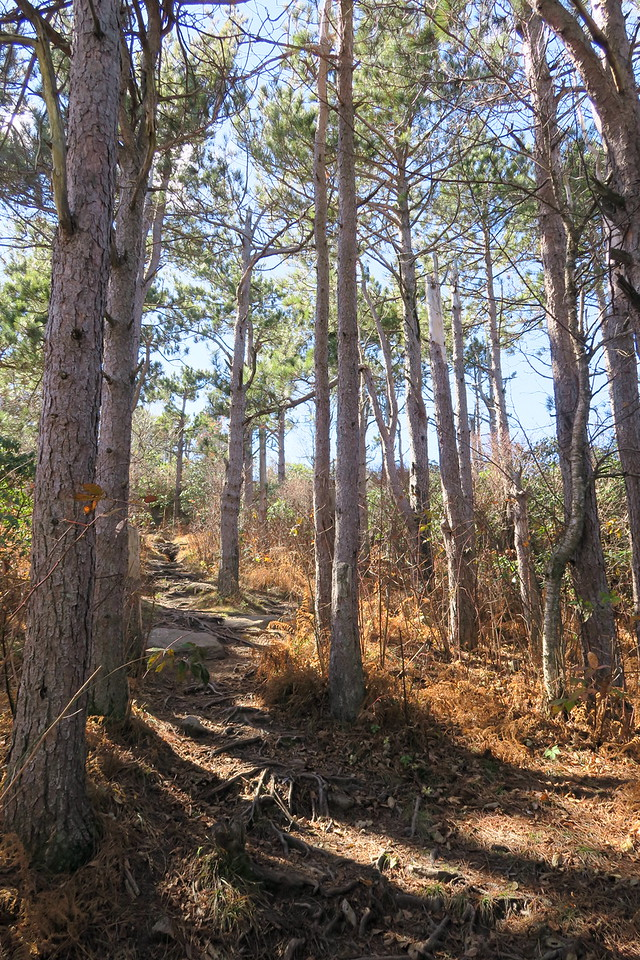 Art Loeb Trail -- 5,780'