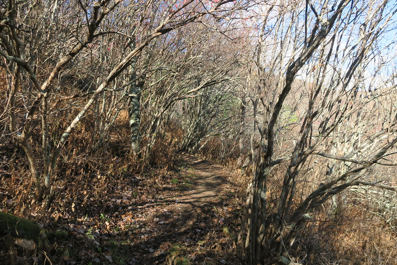 Mountains-to-Sea Trail -- 5,750'