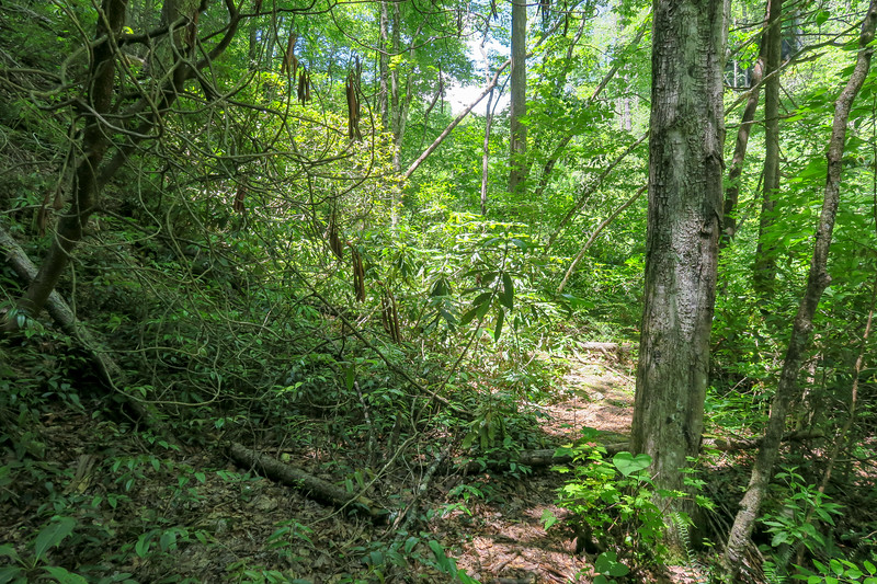 Boxcar Falls/Rail Grade Path -- 2,470'