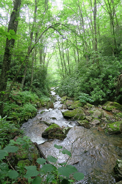Haywood Gap Stream -- 4,550'