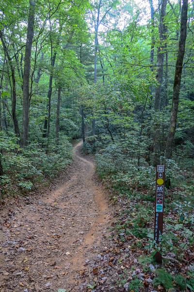 Deerfield Loop/Pine Tree Loop Trail Junction -- 2,320'