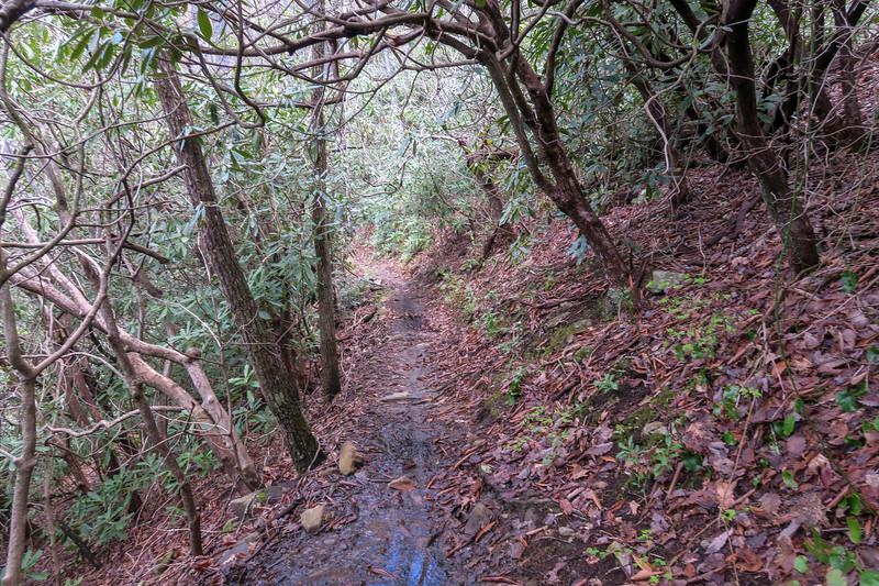 Squirrel Gap Trail -- 3,450'