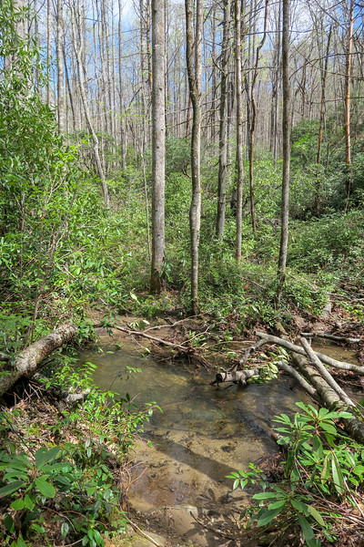 Cantrell Creek Trail (Crossing #3) -- 3,000'