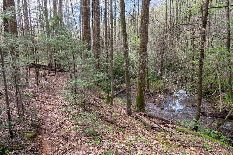Cantrell Creek Trail -- 3,080'