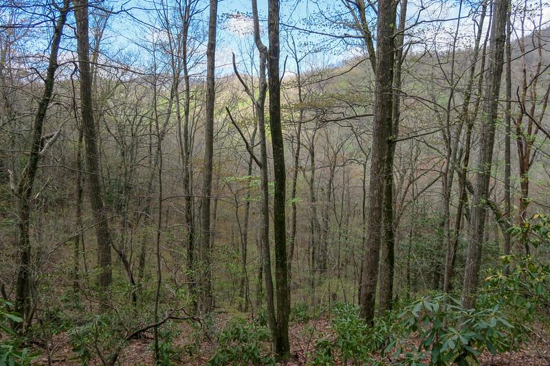 Squirrel Gap Trail -- 3,440'