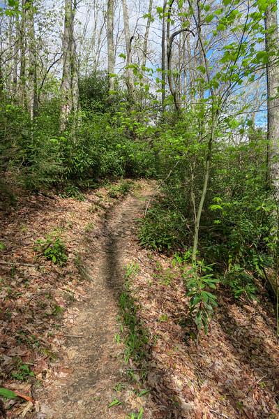 Squirrel Gap Trail -- 3,160'