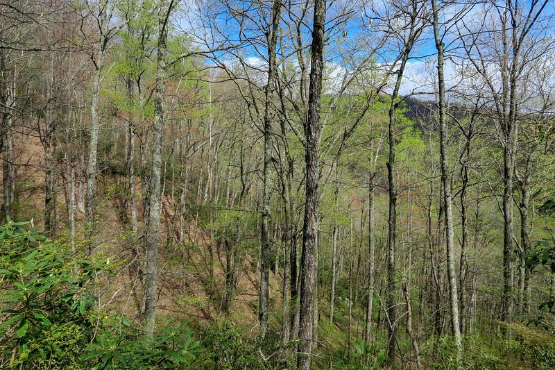 Squirrel Gap Trail -- 3,300'