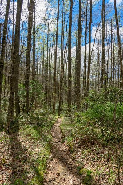 Cantrell Creek Trail -- 3,050'