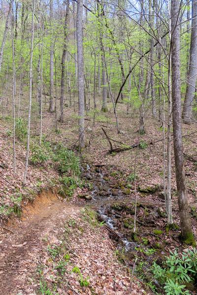 Squirrel Gap Trail -- 3,350'