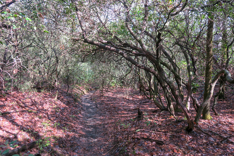 Mullinax Trail -- 2,980'