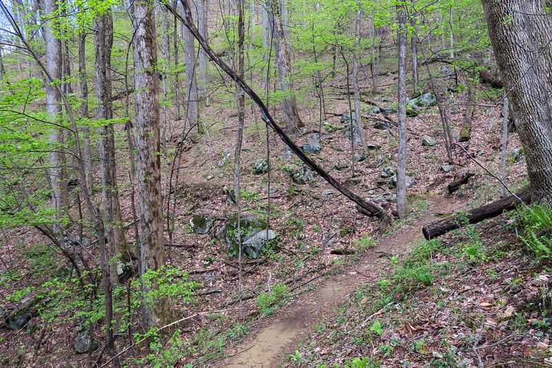 Squirrel Gap Trail -- 3,400'