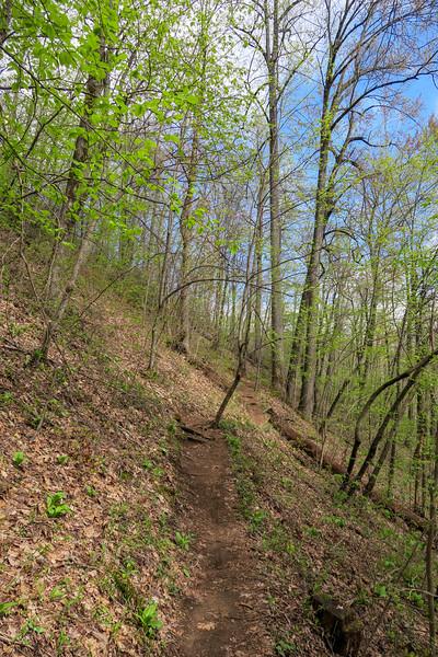 Squirrel Gap Trail -- 3,460'
