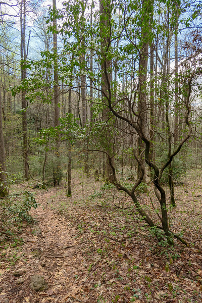 Cantrell Creek Trail -- 3,150'