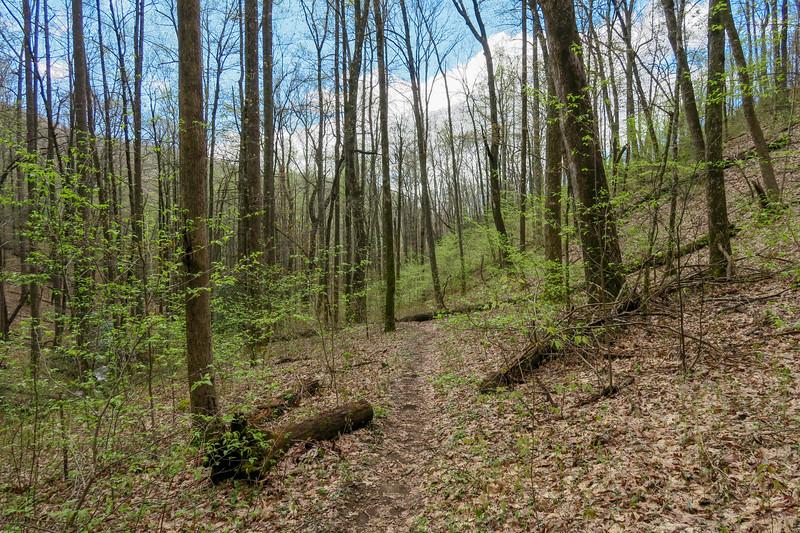 Cantrell Creek Trail -- 3,200'