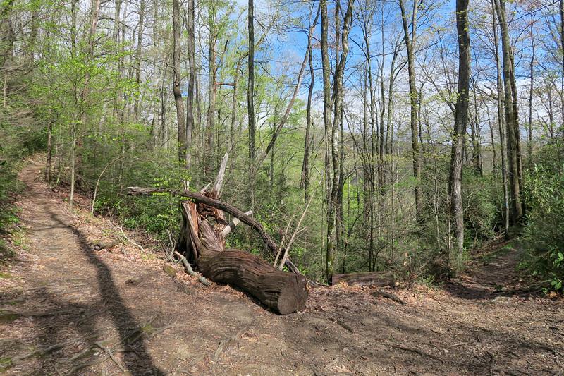 Squirrel Gap-Poundingmill Trail Junction -- 3,150'