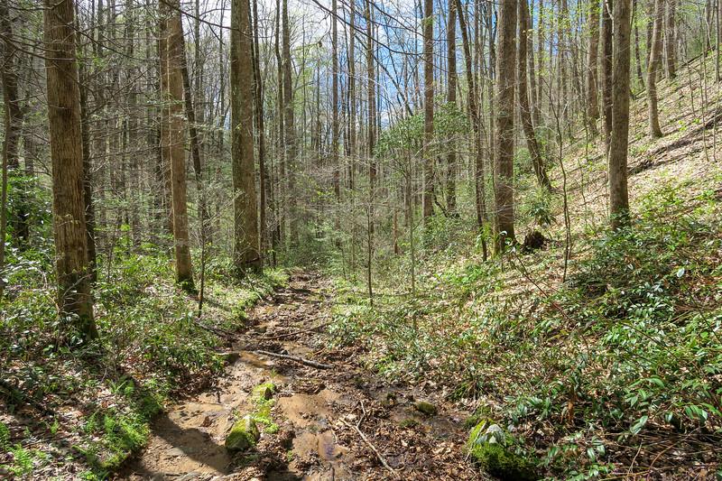 Cantrell Creek Trail -- 2,940'