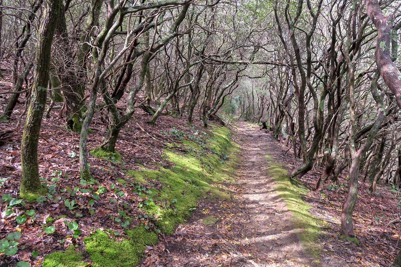 Squirrel Gap Trail -- 3,420'