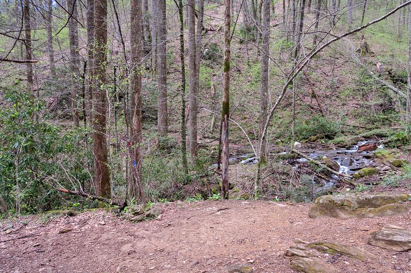 Squirrel Gap-Cantrell Creek Trail Junction -- 3,300'