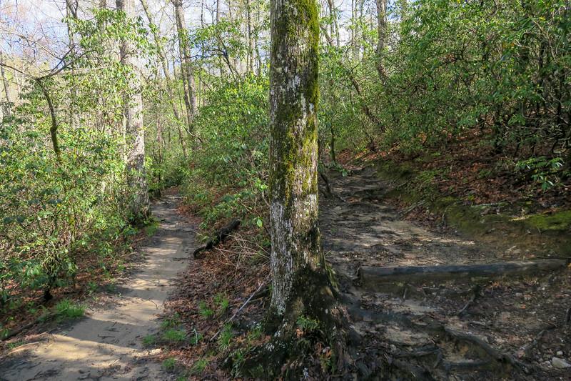 Mullinax Trail -- 2,940'