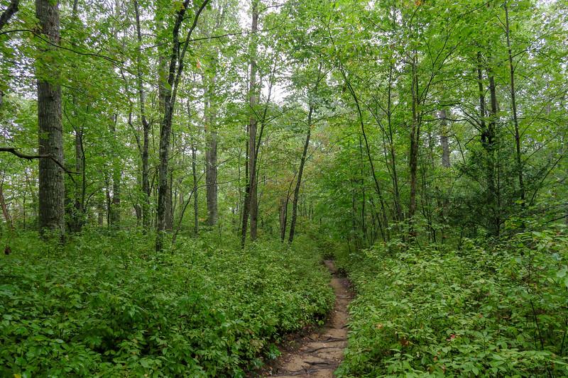 Cat Gap Loop Trail -- 3,230'