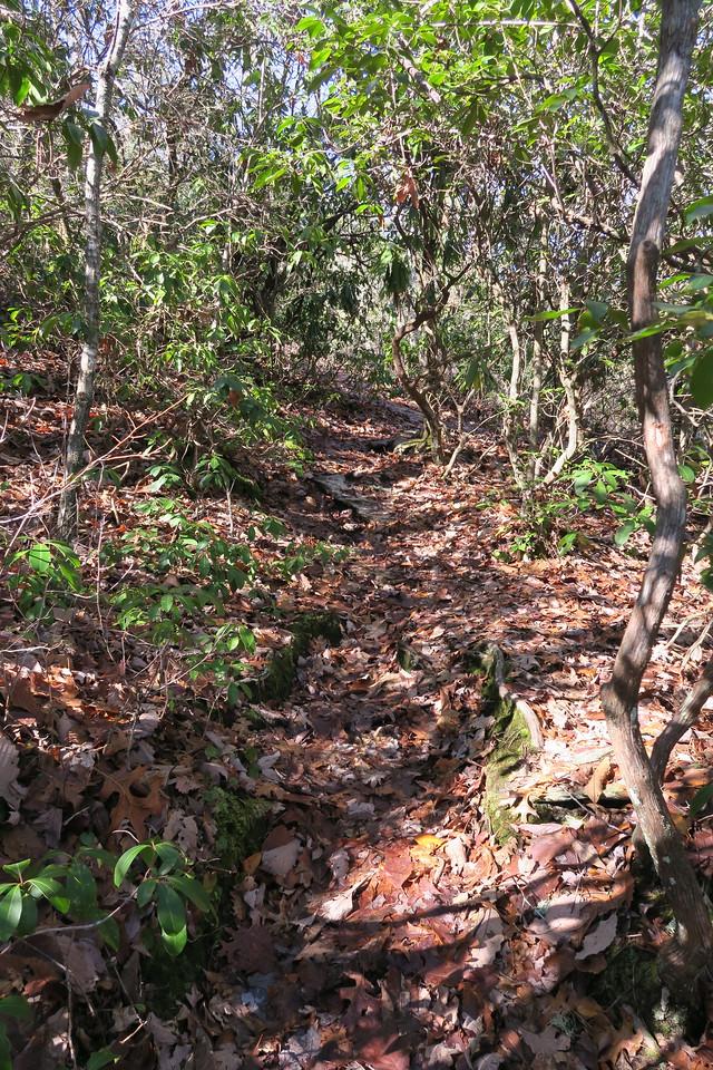 Cedar Rock Trail -- 3,950'