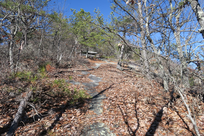 Cedar Rock Trail -- 3,520'