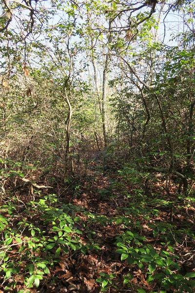 Cedar Rock Trail -- 3,500'