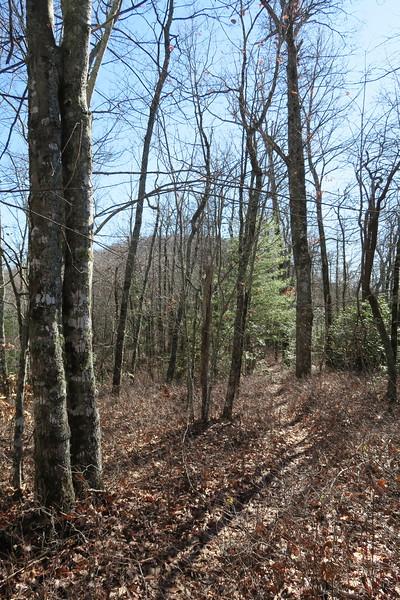 Cedar Rock Trail -- 3,480'