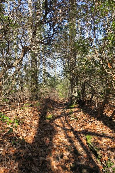 Art Loeb Trail -- 3,680'