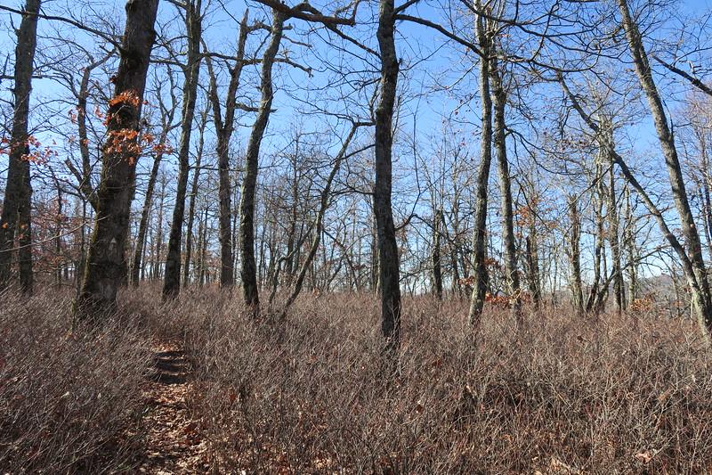 Cedar Rock Trail -- 4,040'