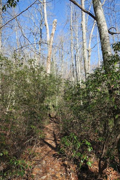 Art Loeb Trail -- 3,500'