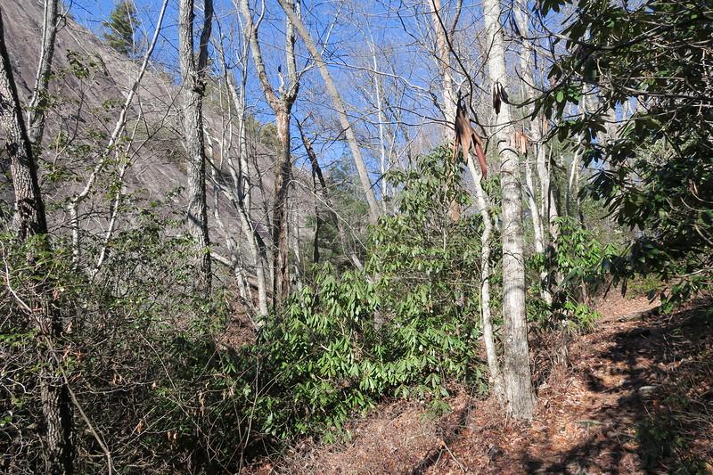 Art Loeb Trail -- 3,520'