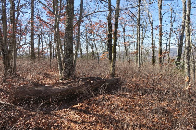 Cedar Rock Trail -- 4,050'