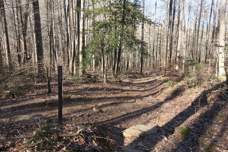 Cedar Rock Loop-John Rock Trail Junction -- 2,600'
