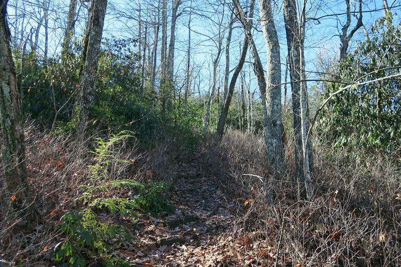 Cedar Rock Trail -- 3,900'