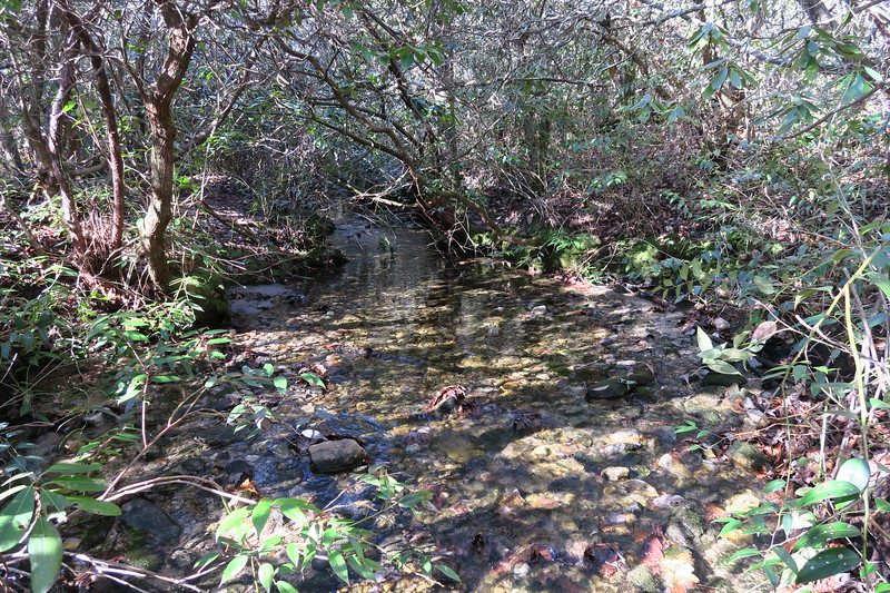 Tributary of Hickory Mountain Branch -- 3,300'