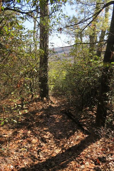 Cedar Rock Trail -- 3,700'