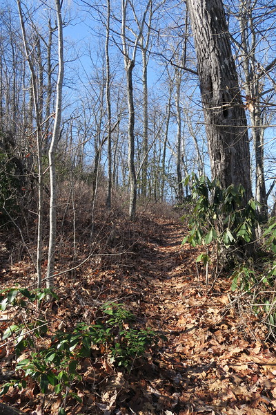 Cedar Rock Trail -- 3,800'