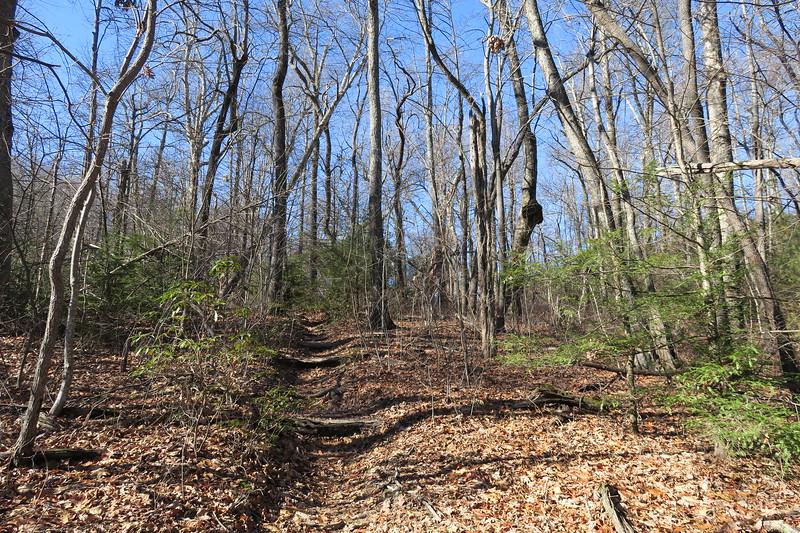 Art Loeb Trail -- 3,600'