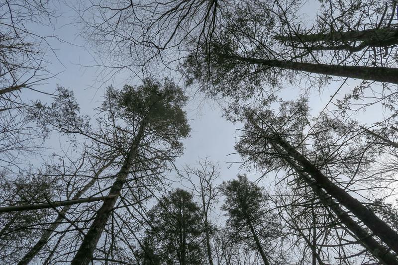 Long Branch Trail