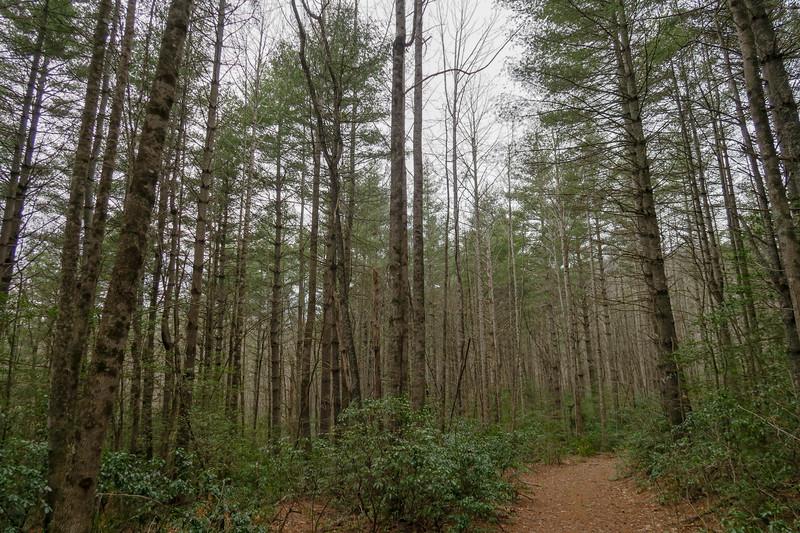 Cemetery Loop Trail
